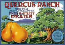 QUERCUS RANCH FINEST BARTLETT PEARS FRUIT CALIFORNIA VINTAGE POSTER REPRO LARGE