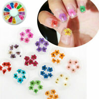 12 Color Wheel Elegant DIY Nail Art Decor Real Dried Flowers UV Gel Acrylic Tips