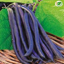 Judia Amethyst - Enana violeta ( 30 semillas ) seeds - Judía beans