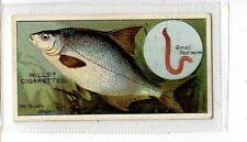 (Jb4447-100)  WILLS,FISH & BAIT,THE SILVER BREAM,1910#16