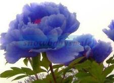 50 Seeds Rare China's Blue Peony Seeds Paeonia Suffruticosa Flower Tree Plant
