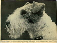 1930 Book Plate Print Wire Haired Fox Terrier Dusky Reine Bowes Basil P V Lowe