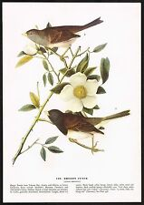 1930s Vintage John James Audubon Oregon Junco Bird Art Print