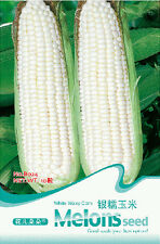 10 Seeds/Pack White Waxy Corn Seed Maize Zea Mays Organic Original Pack B024