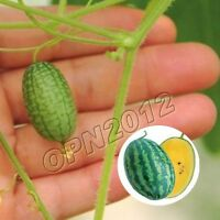 10pcs Pepquino Seeds Mini Watermelon Plant Delicious Melon Garden Yard Grow Sow