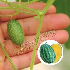 10x Thumb Watermelon Pepquino Seeds Plant Delicious Melon Vegetables Garden Grow