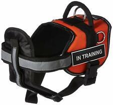 "DT Works Orange ""IN TRAINING"" MEDIUM Harness w/ Chest Padding & Padded Leash"