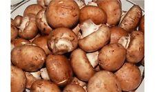 Champignon mushrooms Spawn / seeds  Royal