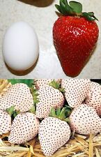 20 Seeds Rare Giant Red Strawberry Seeds + 20 White Snow Strawberry Fruit Seeds