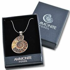 Beautiful Ammonite Pendant in Gift Box Necklace Real Fossil Madagascar