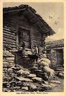 1899) ALPE MOTTA (SONDRIO) RUSTICO ALPESTRE. ANIMATA, PECORE. VG IL 21/8/1950.