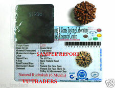 6 MUKHI RUDRAKSHA / SIX FACE RUDRAKSH LAB CERTIFIED NEPAL BEAD WITH X RAY REPORT