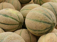 ' Cantaloupe- Iroquois Melon Vegetable Seeds 35-45 ct  (1g) easy to grow