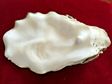 ~* Oyster Shell / Mother of Pearl / Pearl Sac / Unique / Absolutely Beautiful *~