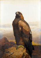 Excellent Oil painting nice bird hawk in landscape size 18x24inch free shipping