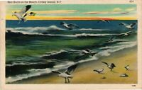 Vintage Postcard - Sea Gulls On The Beach Coney Island New York NY #4222