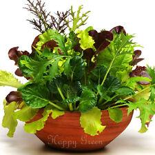 Hoja de bebé italiano Mix - 1200 semillas-Basil lechuga escarola silvestre cohete brócoli