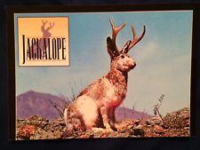 Jackalope Postcard Jackrabbit Antelope