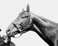 1920 Champion Racehorse MAN O WAR Glossy 8x10 Photo Print Thoroughbred Poster