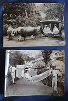 "2 Szenebilder von Manuel de Olim Perestello ""Madeira Funchal"" um 1900 sf"