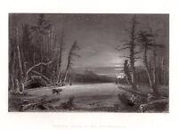NIGHT HUNTING  Black Bear CATSKILL MOUNTAINS NEW YORK
