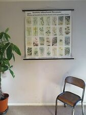 VINTAGE PULL ROLL DOWN BOTANICAL SCHOOL WALL CHART  OF PROTECTED WILD FLOWERS