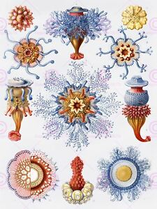 Nature Anemones Biology Ernst Haeckel Germany Vintage Canvas Art Print