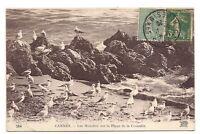 cannes , les mouettes sur la plage de la croisette