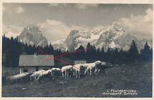Nr.11086 Foto   PK Hinterstoder Hütterboden  Almhütte Kuh Herde 1925  O.Ö.