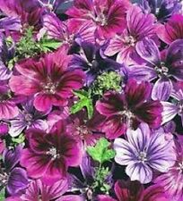 20+ Malva  Mystic Merlin Mix Flower Seeds / Sylvestris / Perennial