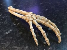 Large Skeleton Hand Creepy Fish Tank Aquarium Ornament Prop 904