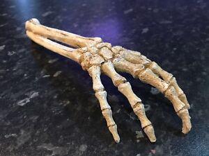 26cm Large Skeleton Hand Creepy Fish Tank Aquarium Ornament Prop SK7