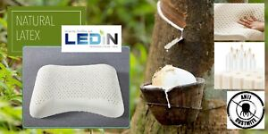 Pilatena Thailand 100% Natural Latex Pillow Curved Medium Memory Beauty Sleep