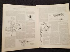 Rambles With Nature Students - 1898 Book Print