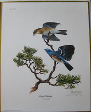 "Ray Harm Original Print ""Lazuli Bunting"" 1972"