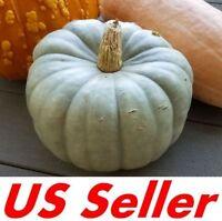 20 Seeds, Heirloom JARRAHDALE Pumpkin Seeds E170 Winter Squash Sweet Long Keeper