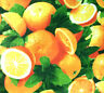"""ORANGE CITRUS PRINT POLY COTTON FABRIC  60"""" By The Yard All Over Oranges"""