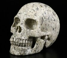 """Huge 5.0"""" CRINOID FOSSIL Carved Crystal Skull, Realistic, Crystal Healing"""