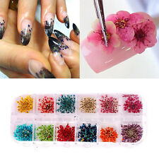 12 Colors Real Nail Dried Flowers Nail Art Decoration Design DIY Tips Manicure