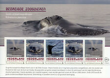 Netherlands 2018 MNH North Pacific Right Whale 5v M/S Whales Animals Stamps