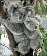 Cross Stitch Chart Pattern Koala Mum & Babe Needlework Picture Design Craft
