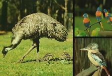 EMU, LORRIKEETS & KOOKABURRA POSTCARD PRE-STAMPED Australia Post Series III