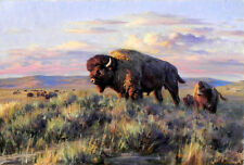 Oil painting Picture TX Animals Buffalo HD Print on canvas 12x16 inches L176