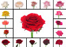 Lentikular -Wackelkarte: Rotierende Rosen - Rotating Roses