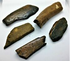 More details for very large ancient historical british fossil bone collection - tertiary period