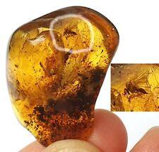 Natur Bernstein fossiler mit Einschluss  Insekt  Sammlung L8166