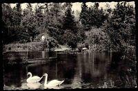 KELLINGHUSEN b. Steinburg Schleswig-Holstein AK 1963 Schwäne im Stadt-Park