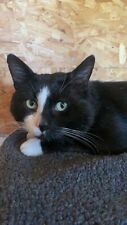 Marvin needs your help. Please donate towards his care at Sandbach Animal Rescue