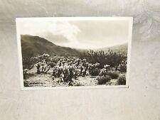 1920s RPPC Real Photo POSTCARD Cholla Cactus California Desert