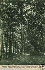GAMBARIE S. STEFANO ASPROMONTE (RC) 2, FAGGETA, 1935      m
